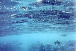 Язва и рак, «боятся» морской воды