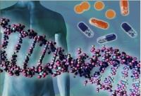 Ученые выделили ген, восстанавливающий ткани как в юности
