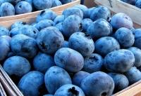 Учеными названа ягода долголетия