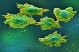 Антипаразитарный препарат оказался способен «выключать» рак