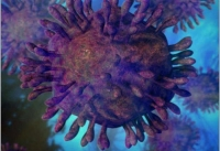 Ученые раскрыли состав вируса гепатита С