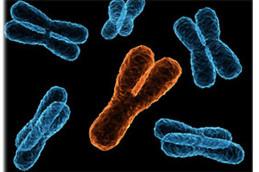 Y-хромосома не исчезнет, подтвердили ученые