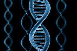 Поломка гена защитит от диабета