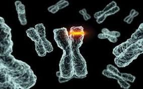 Ученые нашли четыре гена рака груди