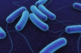 Биоинженерный метод ускорит создание лекарственного средства.