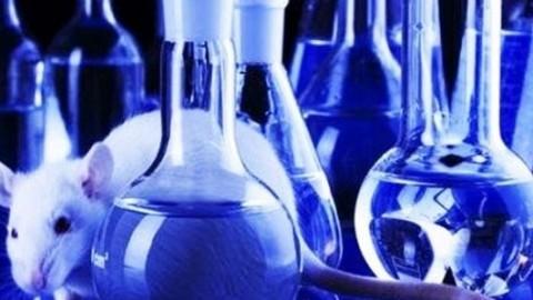 Биомедицинские исследования могут быть сорваны из-за мужского запаха