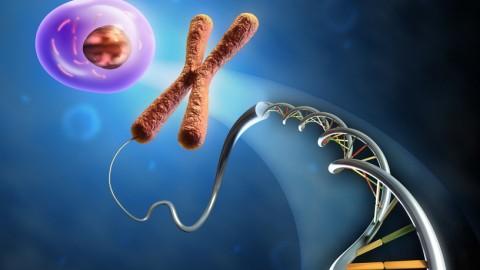 Стволовые клетки и рак: что общего?
