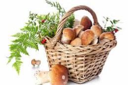Во время лечения рака нужно есть грибы