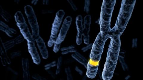 Раковые хромосомы-монстры: откуда они беруться?