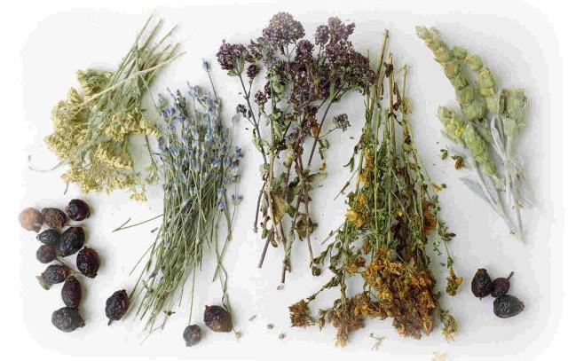 Травы для лечения раковых заболеваний