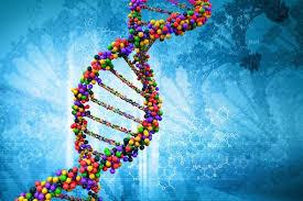 Изучение генома или расшифровка днк