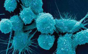 Ученые открыли секрет защиты клеток от рака