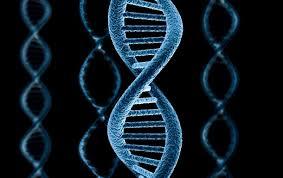 Наличие некоторых генов повышает риск возникновения раковых опухолей
