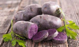 Фиолетовый картофель защитит от рака кишечника