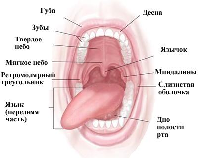 Рак губы и полости рта
