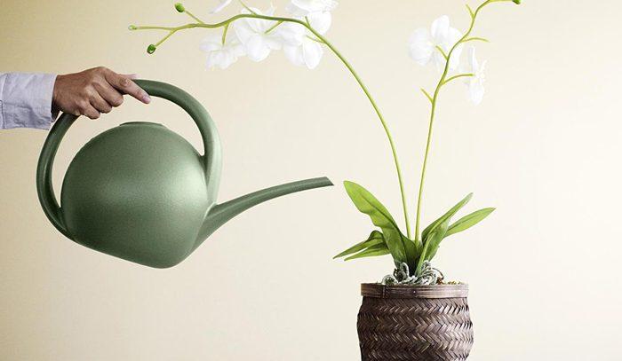 Как поливать орхидеи, чтобы они хорошо цвели?