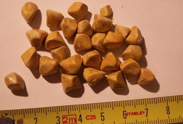 Камни в почках: особенности протекания заболевания и его лечение
