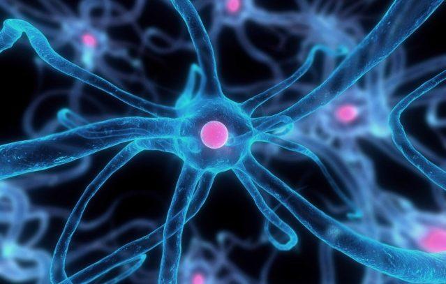 Гендерное поведение определяют тучные клетки мозга