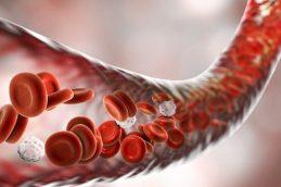 Новая терапия борется с раком с помощью иммунных клеток