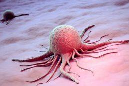 Стволовые клетки способны победить раккрови