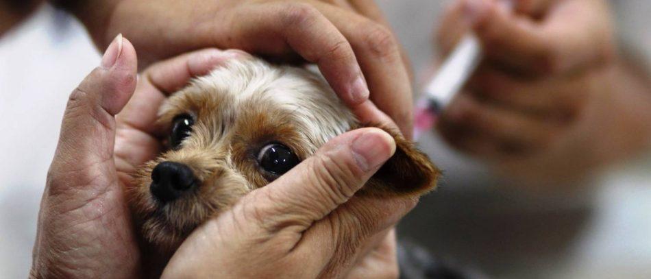 Болезни собак и необходимые прививки