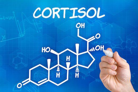 За что отвечает гормон кортизол?