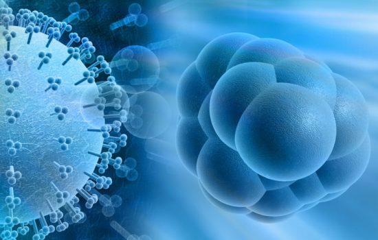 Пересадка стволовых клеток