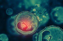 Российские специалисты первыми в мире вырастили здоровые эмбрионы для онкологических пациенток