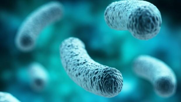 Ученые обнаружили около 30 кишечных бактерий, связанных с колоректальным раком