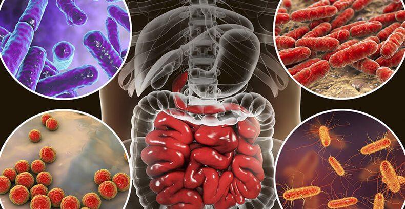 Пробиотики: Бактерии, способные отражать рак