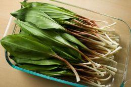 Дикие травы – вкусная и деликатесная пища.