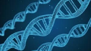 Геномы сибиряков и эскимосов
