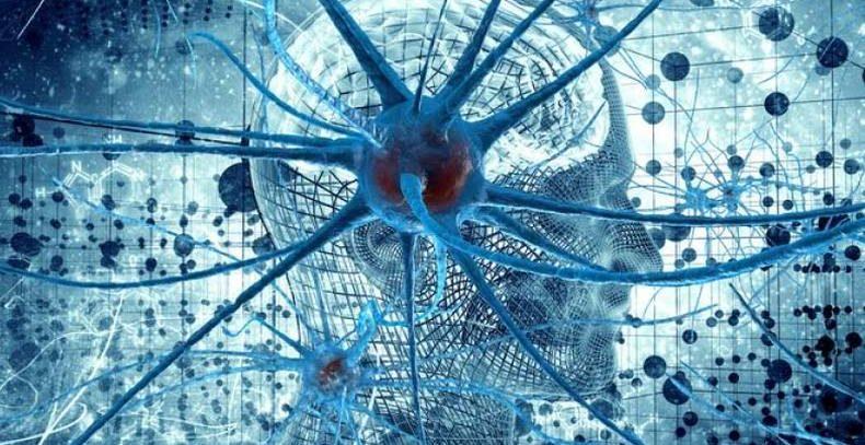 Стволовые клетки на службе у человечества