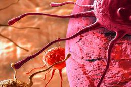 Лекарство от рака – что обнаружили ученые?