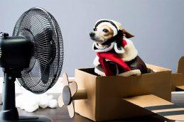 Как выбирать вентилятор