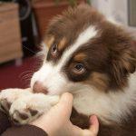 Рак простаты диагностируют собаки