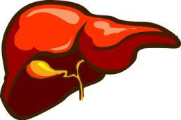 Найдено лекарство против цирроза печени