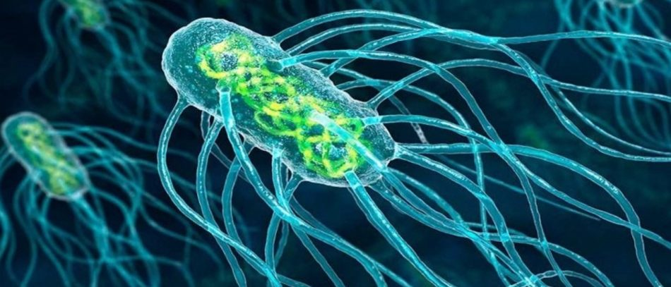 Кишечная бактерия может способствовать развитию рака груди