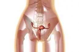 Рак вульвы: причины, симптомы, диагностика, лечение