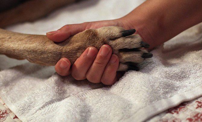 Услуга эвтаназии для животных